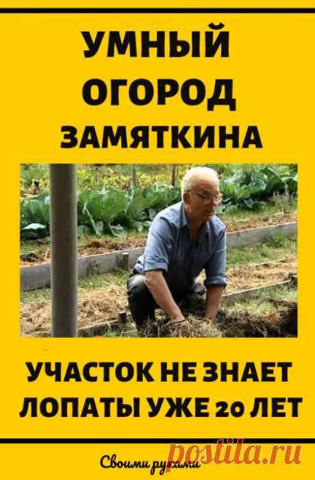 Умная дача Замяткина своими руками: участок не знает лопаты уже 20 лет