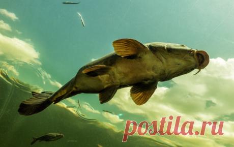 Ловля сазана: наживка, которую сазан просто обожает   Блоги о рыбалке, ремонте и интерьере, даче и огороде, рецептах, красоте и правильном питании