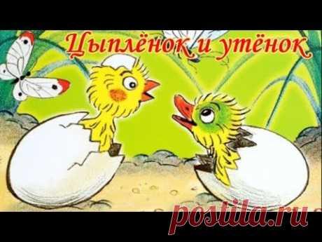Цыпленок и утенок Сутеев Аудиосказка для детей. - YouTube