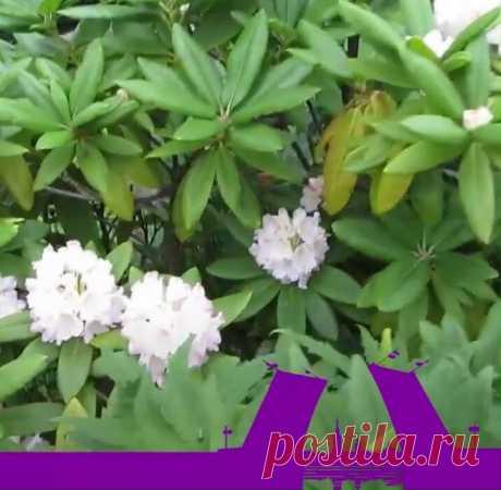 Цветочное царство Петербурга - Ботанический сад