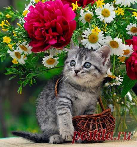 Gatito ama las flores