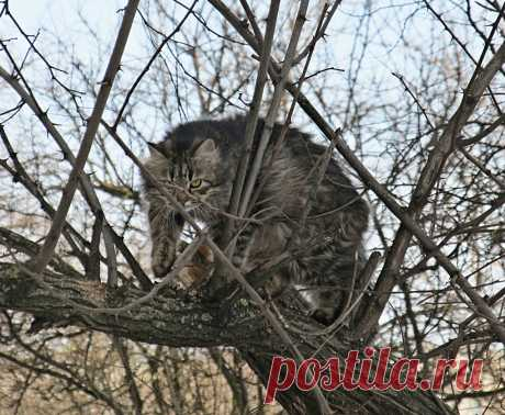 на охоте #на_дереве
