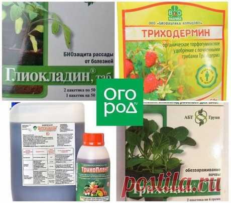 Все средства, которые должны быть в запасе у томатовода | Томаты (Огород.ru)