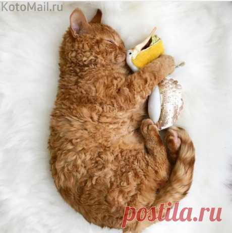 Котёнок, который немного барашек)