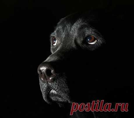 Сергей Тихонов — «Мила» на Яндекс.Фотках