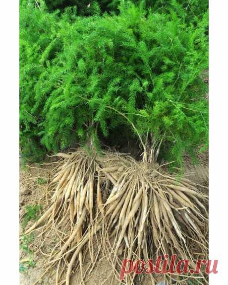 Полезные советы🌿 в Instagram: «Травы которые оздоравливает женское тело на физическом и энергетическом уровне 🌿 Эти травки словно созданы для того, чтобы помогать…»