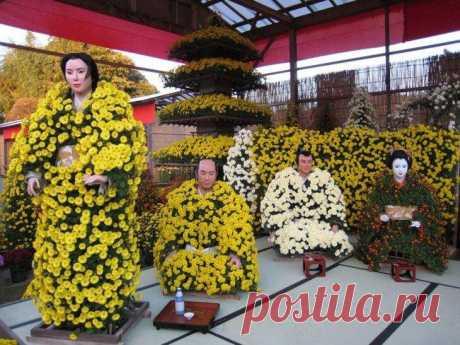 Японская хризантема: описание, особенности выращивания и размножения, фото На протяжении нескольких столетий японская хризантема пользуется очень большой популярностью у профессиональных озеленителей и флористов. Цветут эти растения довольно рано, они неприхотливы в уходе, а...