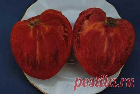 Крупноплодные низкорослые сорта томатов