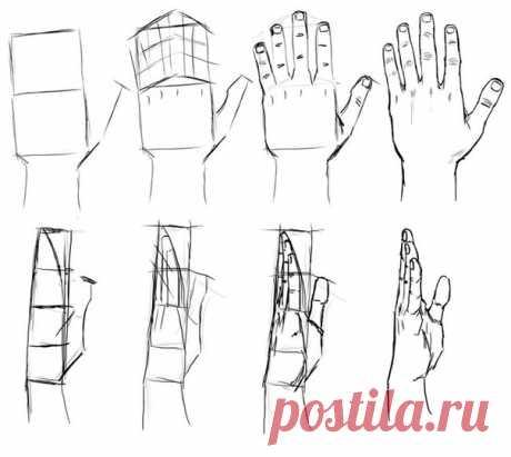 Уроки рисования. Анатомия человека.