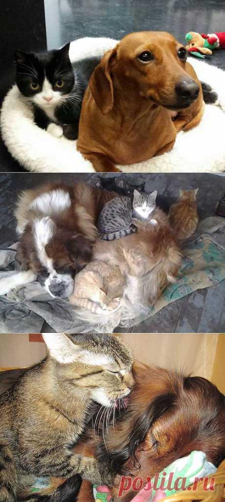 Домашние животные » Клопик.КоМ - сайт любителей животных
