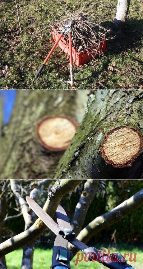 Обрезка деревьев осенью в саду: поддержание плодоношения сада