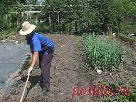 Борьба с сорняками. Прополка плоскорезом Мазнева, наглядно (полная версия) - YouTube