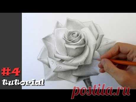 Como dibujar la rosa. Aprendemos a dibujar la rosa por el lápiz.