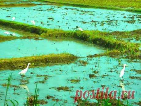 Ланкийцы(традиция-выходной в полнолуние) | Мир+ | Яндекс Дзен