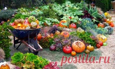 Памятка садовода-огородника (для себя и тех кому интересно)