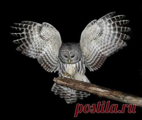 Форум - Замок > Совы, совушки, совуньи и совята...