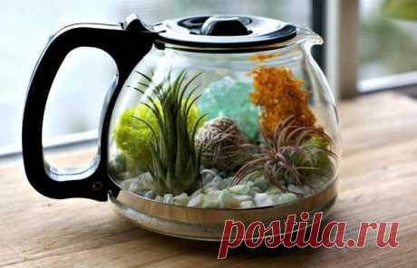 Превращаем старый чайник в цветущий террариум: мастер-класс — Сделай сам, идеи для творчества - DIY Ideas