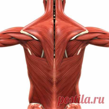 Если мучает боль в спине и шее – эти простые упражнения с полотенцем для вас!   Всегда в форме!