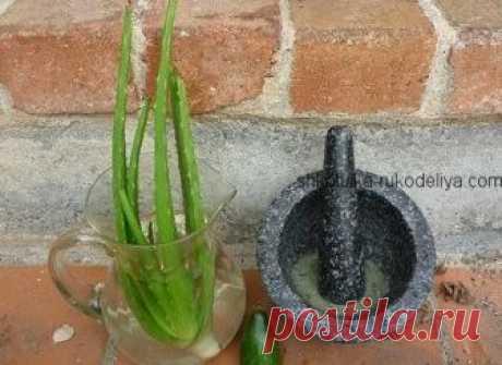 Как сделать маску из алоэ Это удивительное растение обладает особыми увлажняющими свойствами. Мякоть листьев алоэ на 96% состоит из воды, однако, проникает в кожу глубже и во много раз быстрее, чем вода.