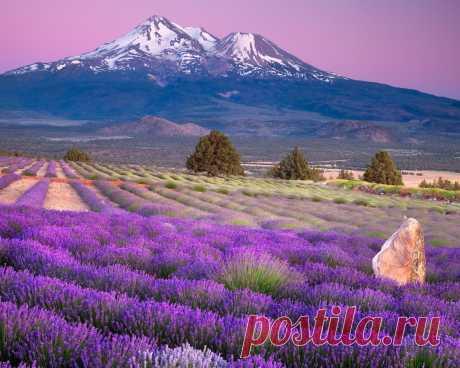Картинки горы, поля, лаванда, франция, provence region, горизонт, природа - обои 1280x1024, картинка №354478