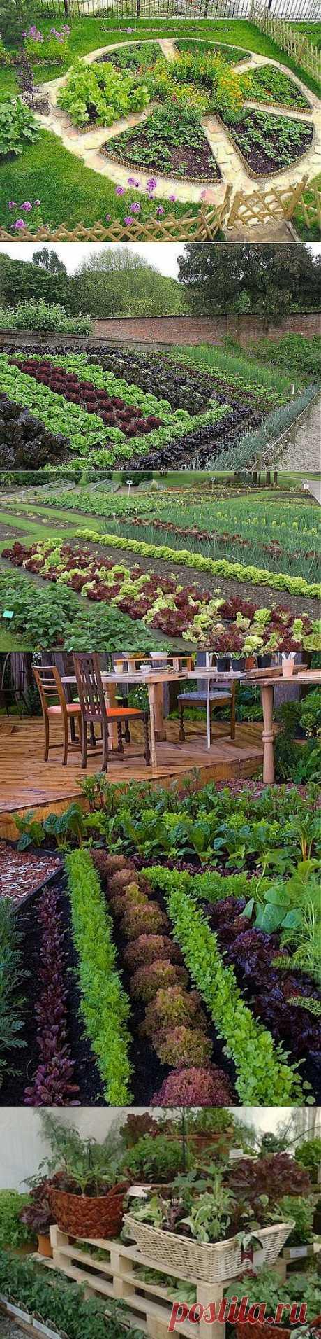 Декоративный огород: как сделать красивые грядки на участке.