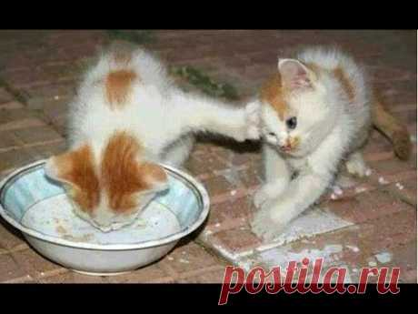 Funny Cats And Kittens Who Don't Want To Share Their Food Compilation [BEST OF]
