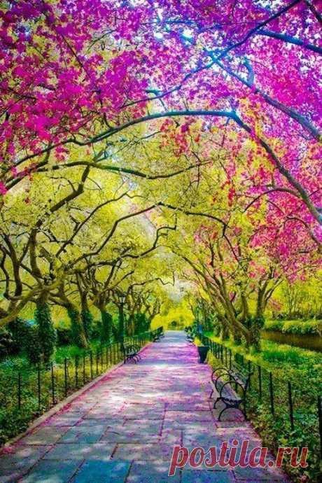 Пришла весна. Природа оживает. Центральный парк, Нью-Йорк