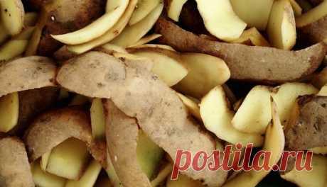 Картофельные очистки больше не выбрасываю, а использую их на огороде. Делюсь своим опытом | Любимая дача | Яндекс Дзен