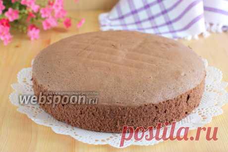 Польский шоколадный бисквит рецепт с фото, как приготовить на Webspoon.ru