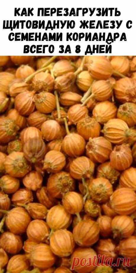 Как перезагрузить щитовидную железу с семенами кориандра всего за 8 дней - Журнал для женщин
