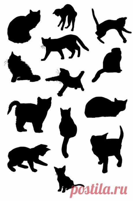 Котики (трафик) / Тенденции / ВТОРАЯ УЛИЦА