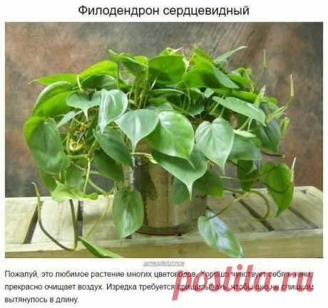 10 домашних растений, которые могут выжить даже в самом темном углу.  Сохрани на стенку, чтобы не потерять