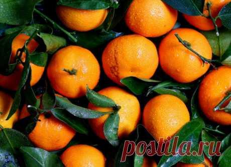 Мандариновое дерево из черенков мандарин, купленных к Новому году. Укоренение черенков мандарин | Огородная фанатка | Яндекс Дзен
