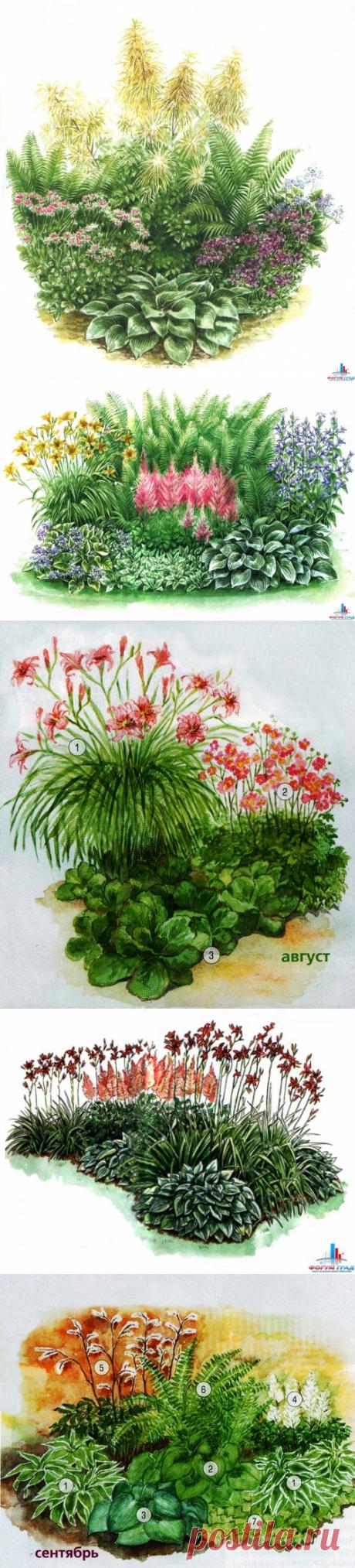 Схемы цветников в тени.: Дневник пользователя Ynat