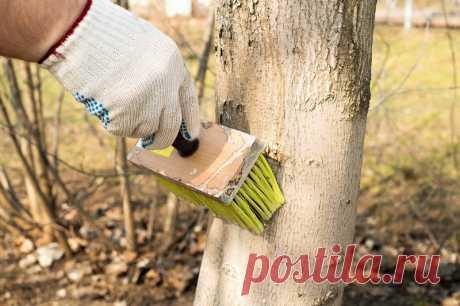 Обработка яблонь от болезней и вредителей ранней весной