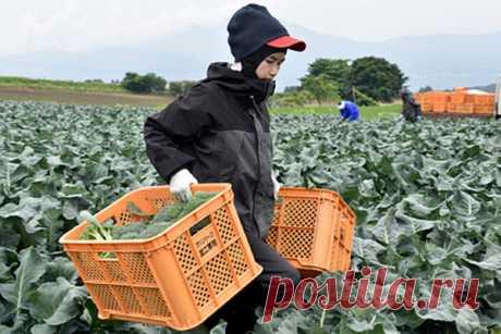 Ещеодна страна начала раздавать деньги населению Таиланд планирует выплатить десяти миллионам фермерских хозяйств денежные пособия вразмере 15тысяч батов (462доллара) насумму 4,6миллиардов долларов, чтобы смягчить последствия пандемии коронавируса, пишет Bloomberg.