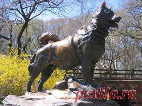 Ба́лто (Бо́лто) (англ. Balto) — сибирская лайка, ездовая собака из упряжки, перевозившей медикаменты во время эпидемии дифтерии в 1925 году в городах штата Аляски, США. Балто родился в 1919 году в небольшом городе Ном на Аляске. Первые несколько лет своей жизни Балто провел за перевозкой еды для города. Он считался довольно медленным и не подходящим для более тяжелой работы. В начале 1925 года дифтерия, страшная болезнь, поражающая детей, разгорелась в поселении Ном.