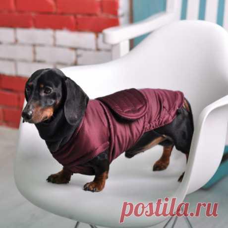 Вязаная одежда для собак своими руками: выкройки для таксы, той терьера и для чихуахуа - Сайт о рукоделии