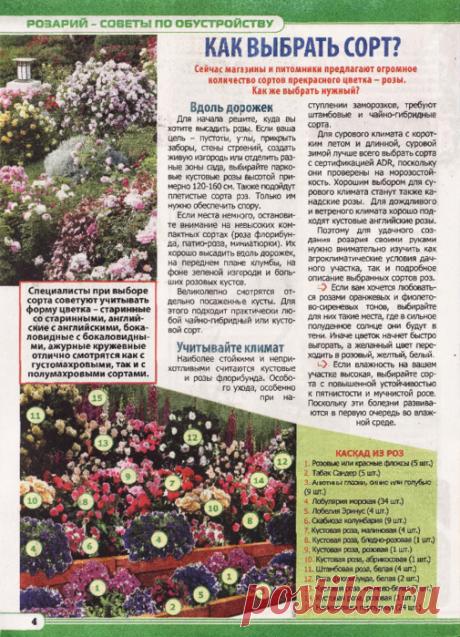 Журнал содержит  практические советы в области здоровья, красоты, кулинарии, домоводства, садоводства.