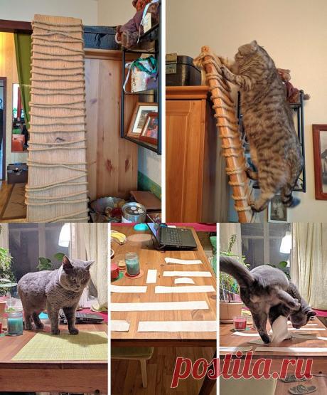 14лайфхаков, которые облегчат жизнь владельцам кошек