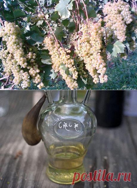 Пробую приготовить легендарную грузинскую чачу на воде и винограде, не добавляя никаких дрожжей: что получилось
