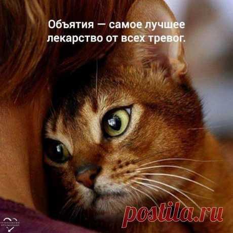 Самое преданное животное - это кошка... И что бы там не говорили)))