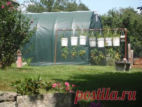Выращивание томатов в ведрах и мешках