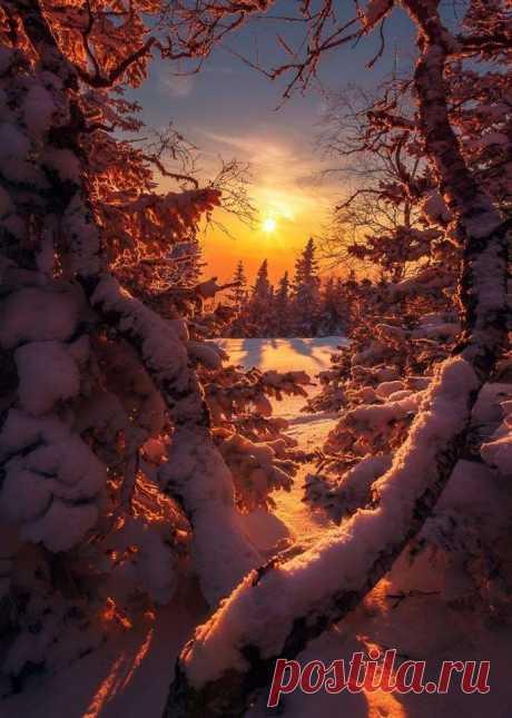 Божествено.🌨❄️ Чудное творение природи .  Зимние закаты как отдельный вид прекрасного!