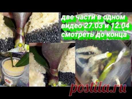 Орхидеи без Субстрата Оставить на месяц без присмотра/Легко/Поролон Фитиль  в помощь