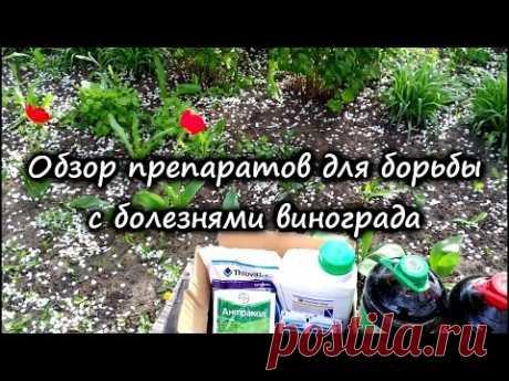 Препараты для борьбы с болезнями винограда, схема обработок, внекорневые и корневые подкормки