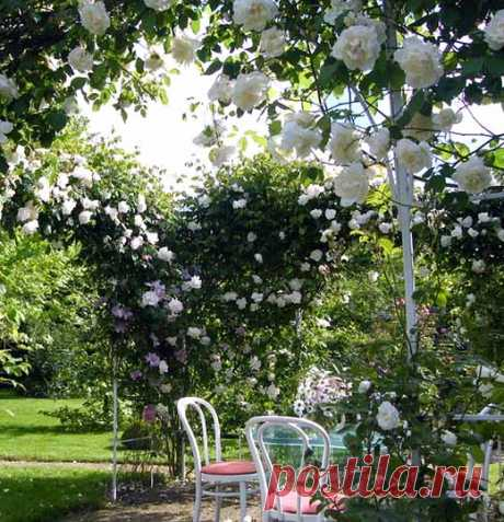 Pletisty rose correct leaving: 35 garden arches from roses
