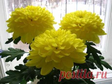 Выбор желтых цветов для интерьера комнат, желтые растения в доме
