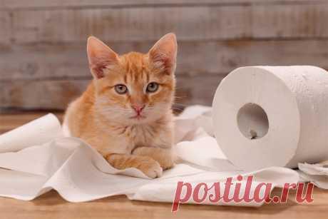 Как избавиться от запаха кошачьего туалета: поддерживаем чистоту с питомцами в доме