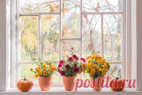Как оригинально оформить подоконник, используя горшечные растения? | Растения